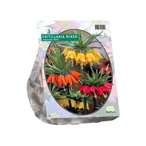Fritillaria Imperialis Mixed per 3