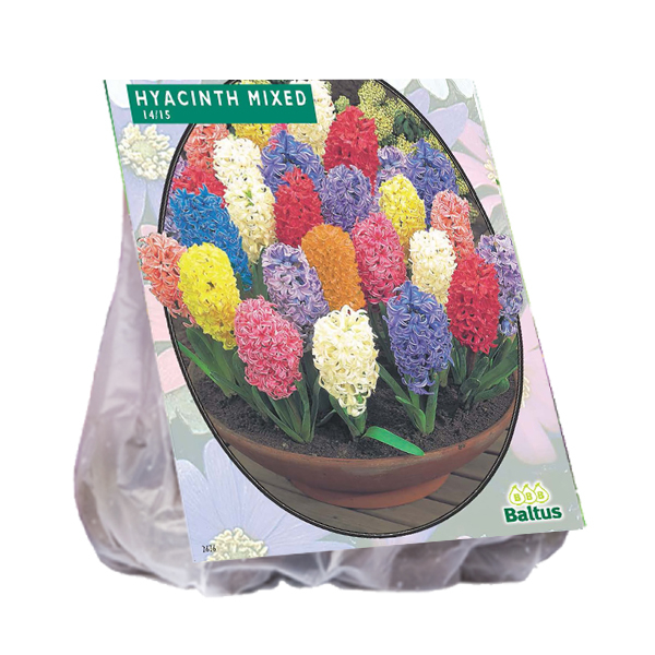 Hyacinth, Mix per 15