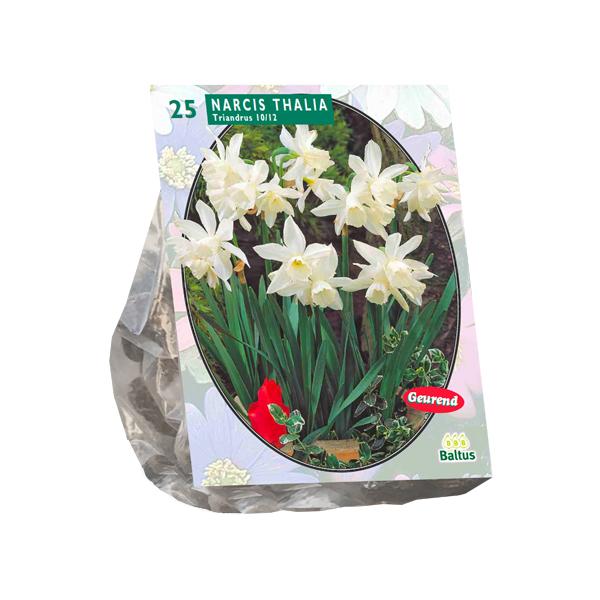 Narcis Mini Thalia per 25