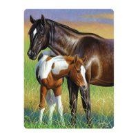 livelife ansichtkaarten - mare & foal