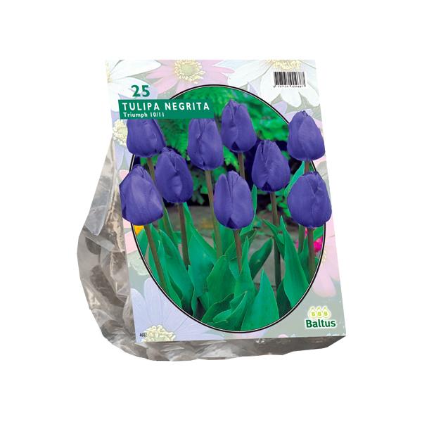 Tulipa Negrita, Triumph per 25